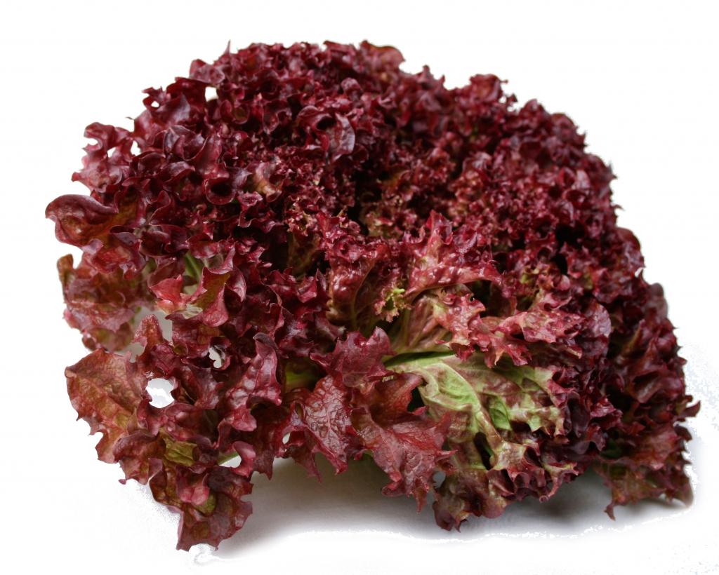 lollo rossa 1 stk salater spinat og bladgr nt. Black Bedroom Furniture Sets. Home Design Ideas